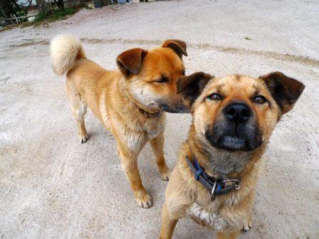 写真・図版 : ご近所で面倒を見ている犬たち。この2匹を含め、ある日突然姿を消し、騒ぎに
