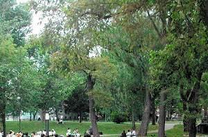 写真・図版 : 北大キャンパス