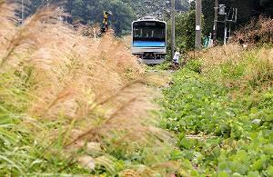 写真・図版 : JR仙石線野蒜(のびる)―陸前小野駅間に残されたままの車両。線路は雑草やススキの穂に覆われている=東松島市