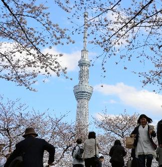 写真・図版 : 隅田公園から見た東京スカイツリー