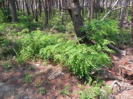 被災地の緑化、ただ木を植えるのではダメ