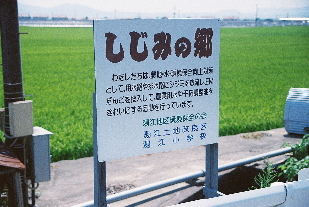 写真・図版 : 地域ぐるみで調整池の浄化対策をやっている一例。しかし、効果はあがっていない=撮影・筆者