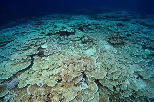 [1]サンゴの白化から温暖化懐疑論を再考する