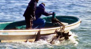 和歌山県太地町のイルカ漁を批判的に描いた映画『ザ・コーヴ』