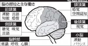 写真・図版 : 図 脳の部位と主な働き
