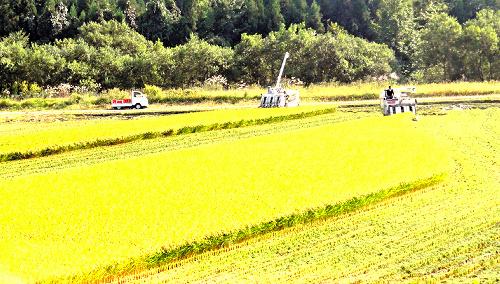 青森県の稲刈りの様子。集落営農では、農地の集約や農業機械の共有で効率化が図られている=上小国ファーム提供