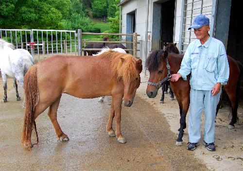 写真・図版 : 愛媛県今治市で飼育されている野間馬