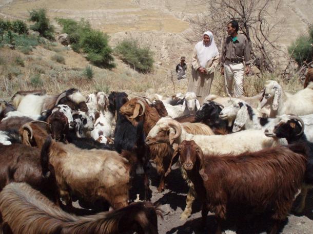 写真・図版 : ヨルダンのカラク県でJICAが実施した女性の地位向上のための事業の支援を受け、ヤギを飼育している女性と夫=2007年7月、撮影・筆者
