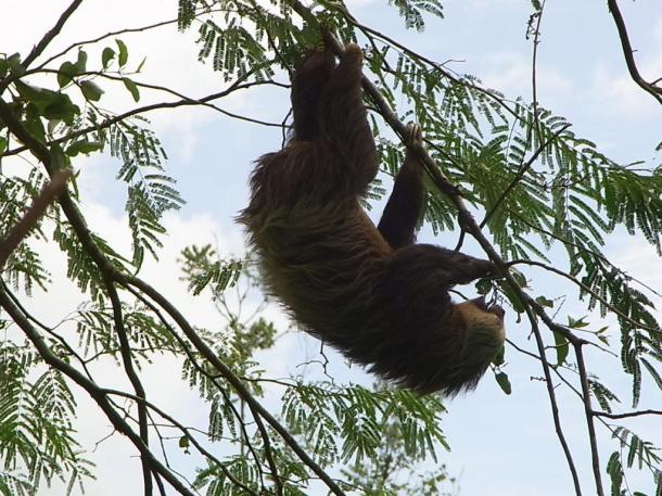 写真・図版 : 2012年に訪れたさい、路上の木にぶら下がっていたナモケモノ=撮影・筆者