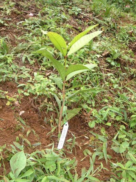 写真・図版 : エコツアーで植林した苗木には私の名を書いた札がつけられた=2003年、撮影・筆者