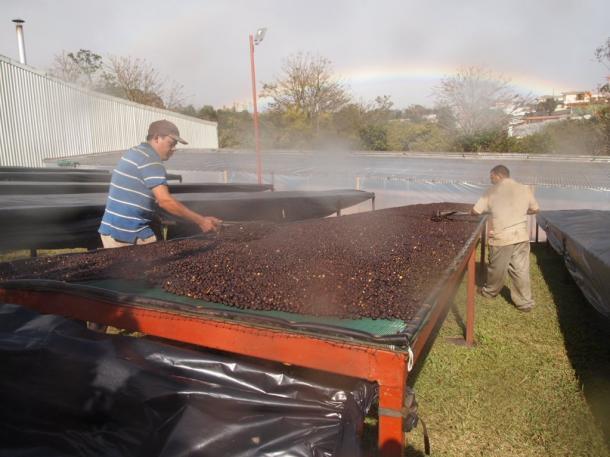 写真・図版 : コーヒー農園で作業する人たちの向こうに虹が出た=撮影・筆者