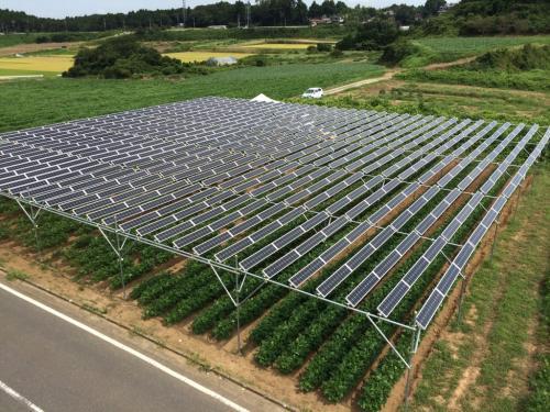 全国初の市民共同ソーラーシェアリング設備「匝瑳第一発電所 Sun Agri」35kW(写真:市民エネルギーちば合同会社)