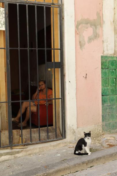 写真・図版 : 猫も無事生きている=撮影・筆者