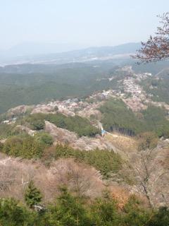 高城山展望台から見下ろした吉野山の桜