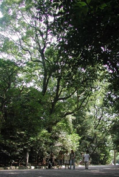 熱田神宮 /鎮守の森