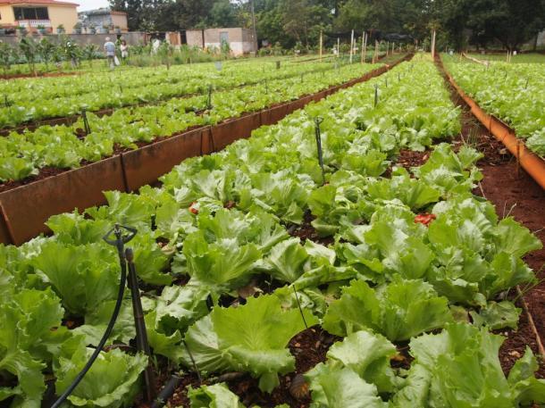 [4]耕作地の8割以上! 世界に名高い有機農業