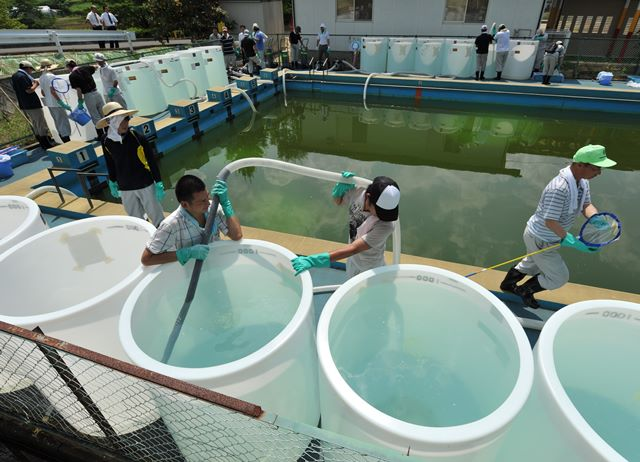 写真・図版 : 福島県伊達市の富成小学校で実施されたプールの水の除染実験。ゼオライトで放射性セシウムを吸着させた=2011年7月9日、日吉健吾撮影