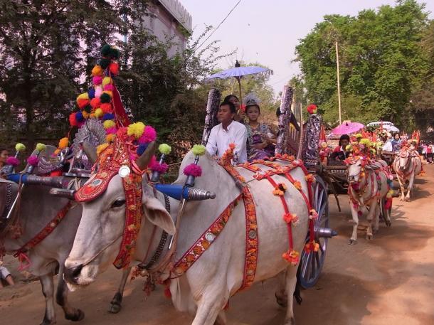 写真・図版 : 牛車が牽く得度式の行列=バガンで 撮影・筆者