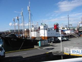 写真・図版 : 捕鯨船。2006年6月、アイスランドで松田撮影