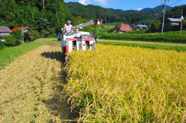 コメを収穫する農家