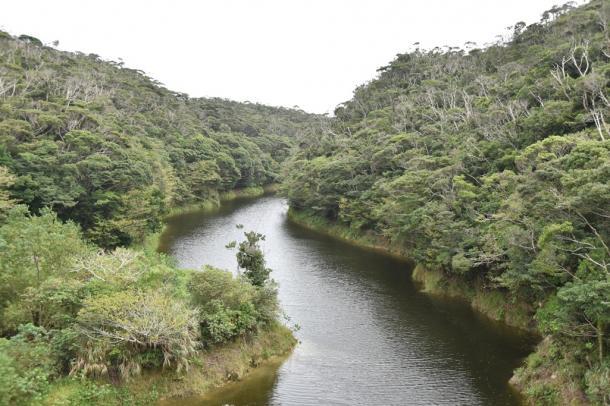 ヤンバルクイナが生息する照葉樹林が広がる=27日午後2時10、沖縄県東村高江