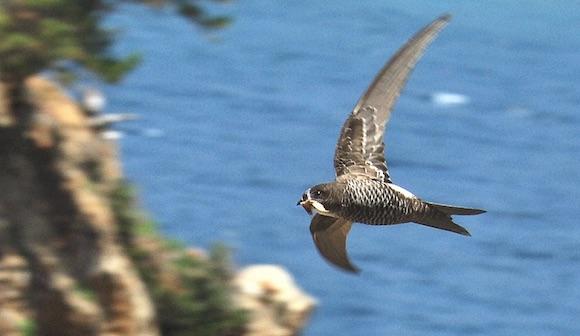 「飛ぶ動物」の進化論
