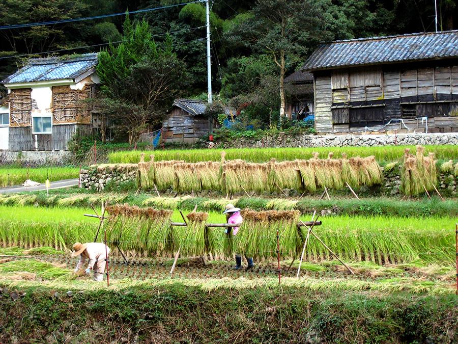 写真・図版 : 日本の農村風景。高齢化が進み、食糧自給率は下がり続けている