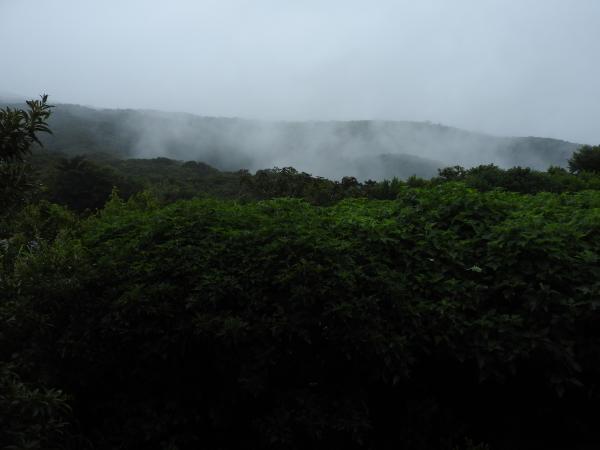 コスタリカを代表する自然保護区モンテベルデの雲霧林