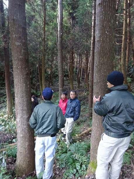 苗木から15年経過したセンダン。樹高約15メートル、胸高直径は38センチに育っている=2016年12月11日、熊本県苓北町