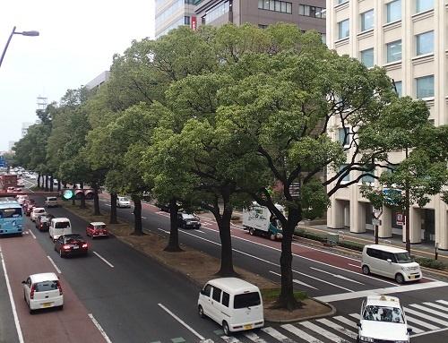 写真・図版 : 対立しあった論争を、大きく育てることで解決したクスノキ並木=高松市