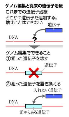 ゲノム編集のイメージ