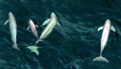 日本政府初の海洋生物レッドリストの問題点