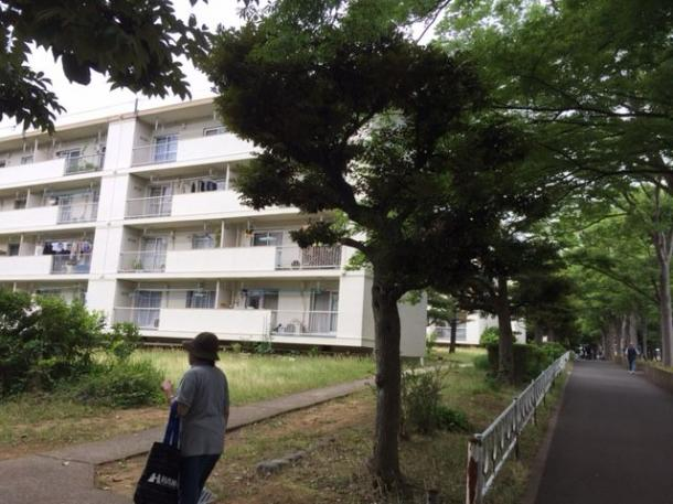 写真・図版 : 街路樹がうっそうと茂り、昼間でも人通りが少ない常盤平団地