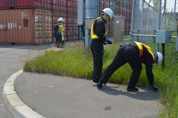 ヒアリ対策で殺虫エサを設置する市職員=釧路市の釧路西港