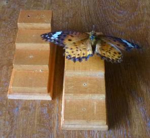 写真・図版 : 【写真1】4段ある平均台の一番上の台の右側の穴に入れて、昆虫針の高さを決める。ここでは平均台は二つ並べてある。