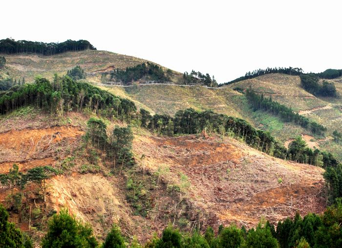写真・図版 : 九州南部には100ヘクタールを超える皆伐地帯がいくつもある。一部で斜面崩壊を起こしているところも見受けられる