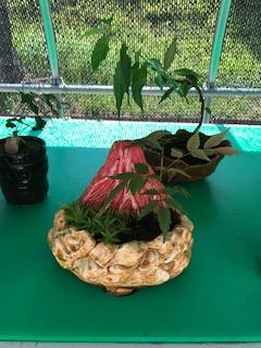 写真・図版 : 富士山をモチーフにした容器でつくったミニ盆栽。容器の色や植物は、受刑者の好みで変わり、受刑者の個性が光る=撮影・筆者