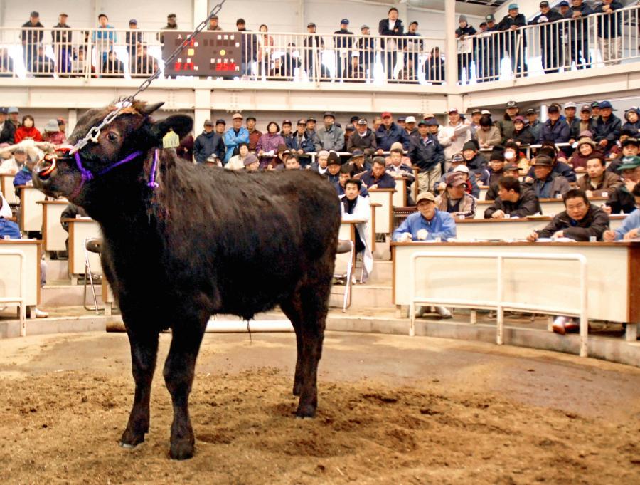 写真・図版 : 競りに出された子牛を見定める畜産農家ら=2008年、松江市