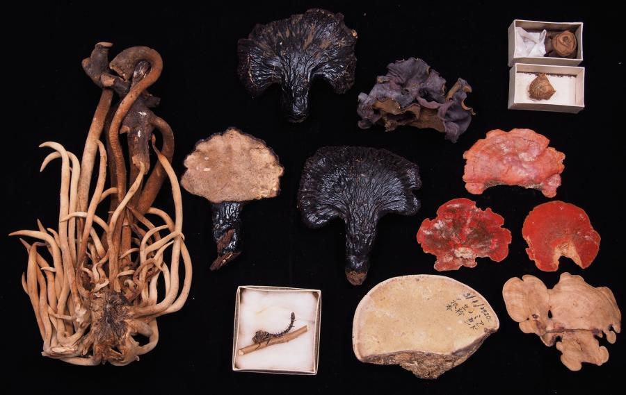 写真・図版 : 南方熊楠の採集品(所蔵:国立科学博物館)。多数の標本を残したが、熊楠の手で成果が発表されることはなかった