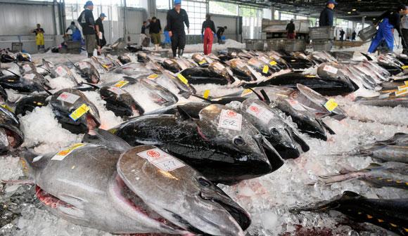 マグロ漁獲規制をどうする?