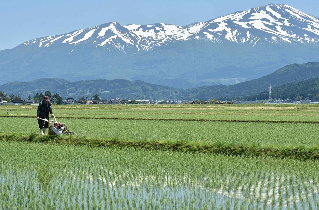 写真・図版 : 山形県酒田市の美田地帯(本文とは関係ありません)