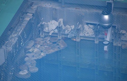 写真・図版 : 3号機の燃料プール。この写真の撮影時、水面近くにはがれきが残っていた=2017年12月1日、竹花徹朗撮影