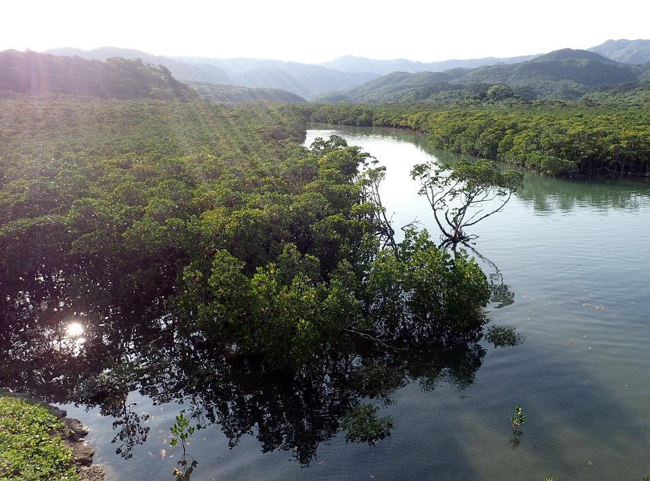 写真・図版 : マングローブの森=4月26日、沖縄県竹富町の西表島、小宮路勝撮影