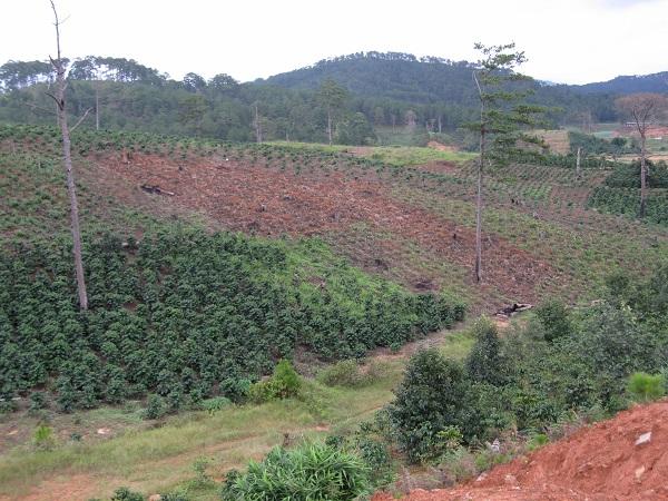 写真・図版 : ベトナムに設けられた大規模なコーヒー農園=原田一宏さん提供