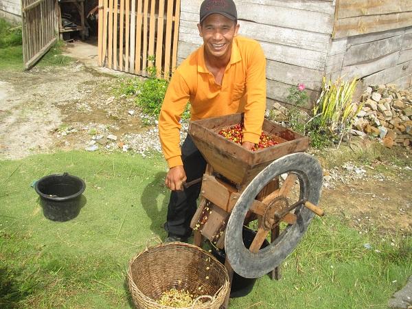 写真・図版 : 手回し機械で皮と果肉を取り除き、後に乾燥させる=原田一宏さん提供