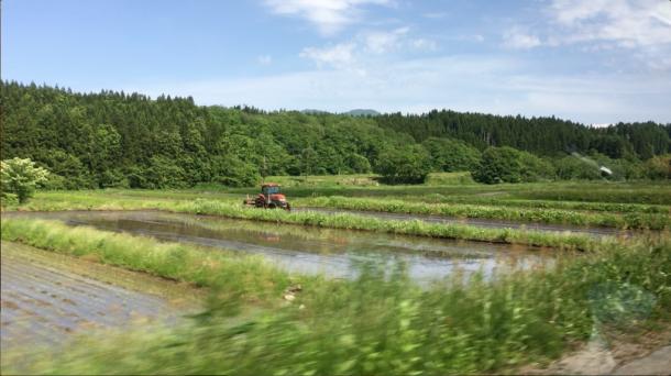 写真・図版 : 田植えの時期を迎えた5月末の鶴岡=撮影・筆者