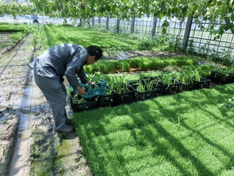 写真・図版 : 生協による農業への参入は珍しい