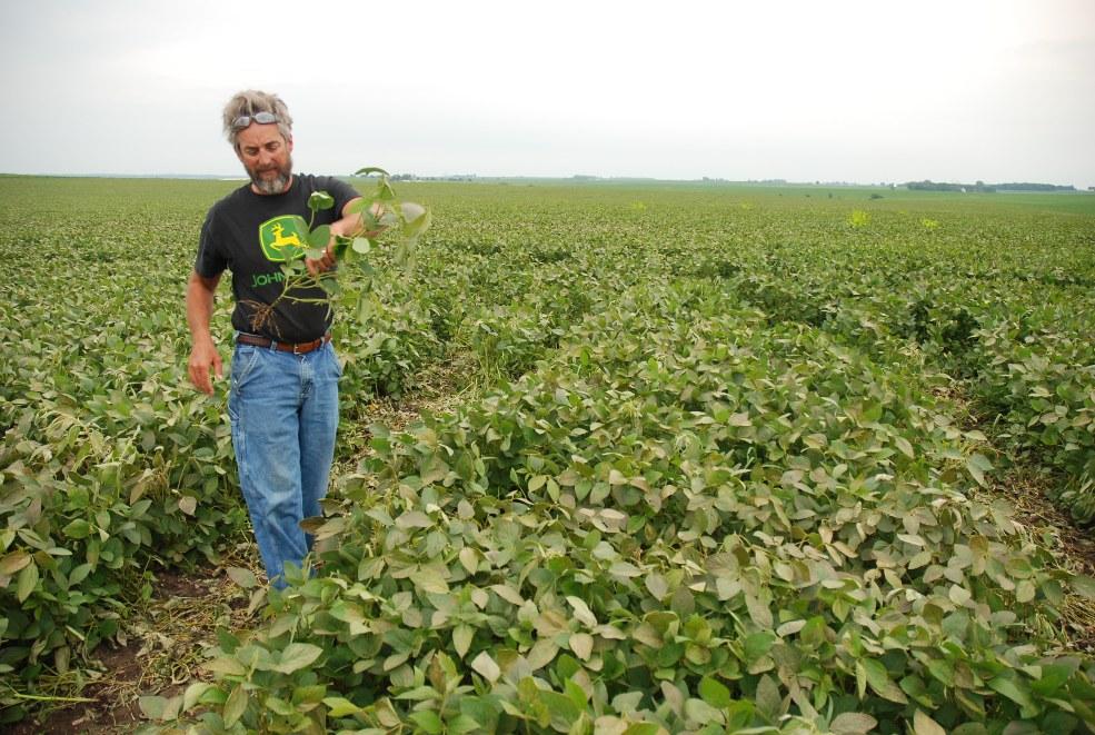 写真・図版 : 米アイオワの大豆農園=2011年7月14日
