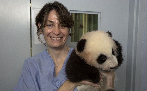 写真・図版 : 生後3カ月あまりの赤ちゃんパンダを抱くレベッカ・スナイダーさん=2013年11月1日、米国・アトランタ動物園。アダム・トンプソン氏撮影