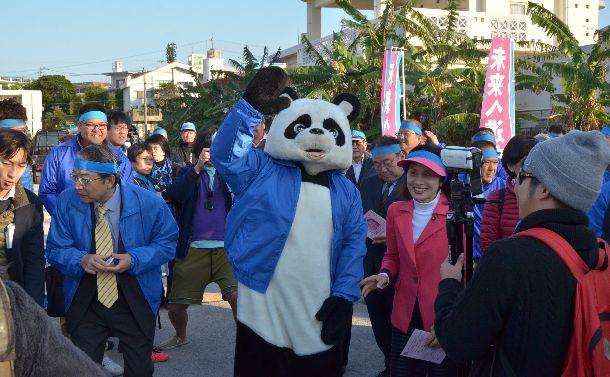 写真・図版 : 沖縄県名護市長選で、前市長だった稲嶺進陣営はパンダの誘致を掲げた。出発式に現れたパンダの着ぐるみ=2018年1月28日、名護市。小山謙太郎撮影
